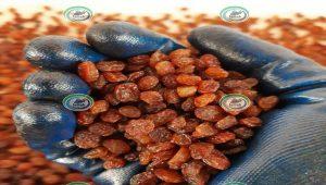 کشمش صادرات تاکستان